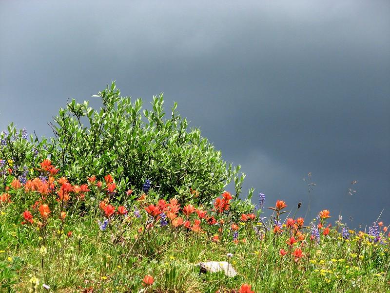 amh FLOWERS (1345).jpg