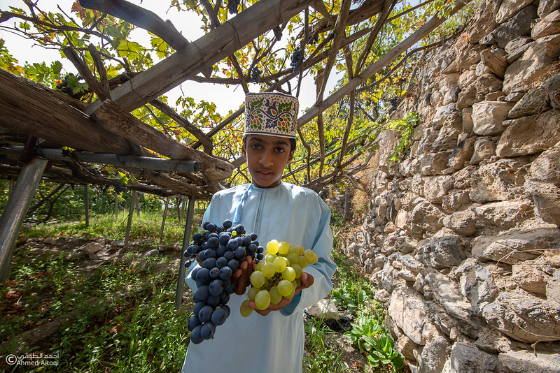 Grape - Wakan village - Nakhal226- Oman.jpg