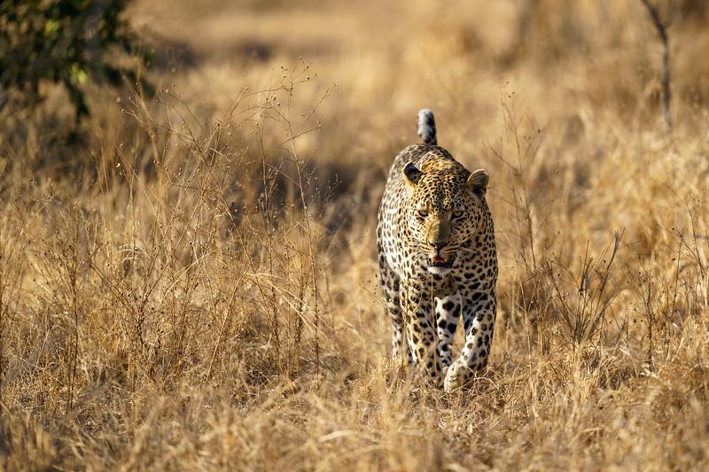 LeopardHills-20181001-3322.jpg