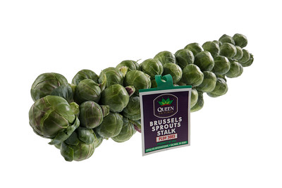 Ippolito Brussels Sprout Stalks 10-5-16