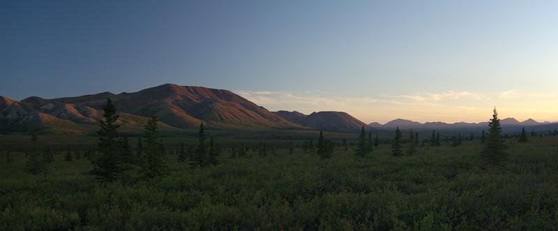 Evening in Denali National Park