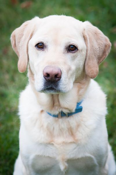 SCHROEDER DOG