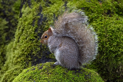 Squirrels & Rabbits