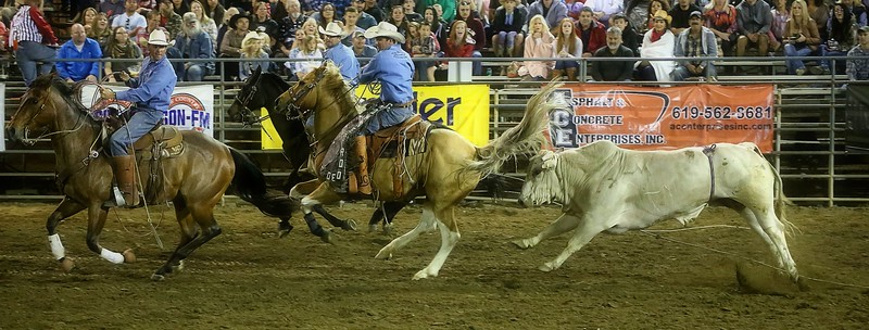 Skeedaddle -Bulls_4.18.2015_Lakeside Rodeo_KC.jpg