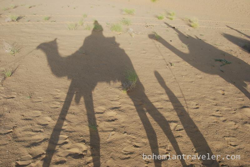 camel shadow on sand (2).jpg