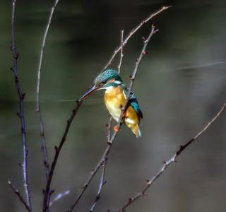 BIRDS IN MEIJI JINGU