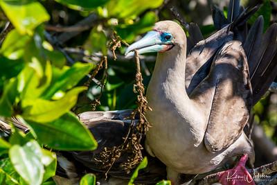 Darwin's Bay - Island of Birds