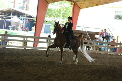32) Saddle Seat/Hunt Seat Equitation 17 yrs old & under