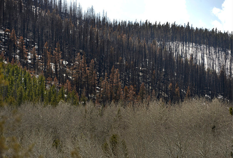 . This portion of the Fern Lake fire shows remnants of a crown fire along the ridge line near Cub Lake on May 13, 2013.   (Photo by Helen H. Richardson/The Denver Post)
