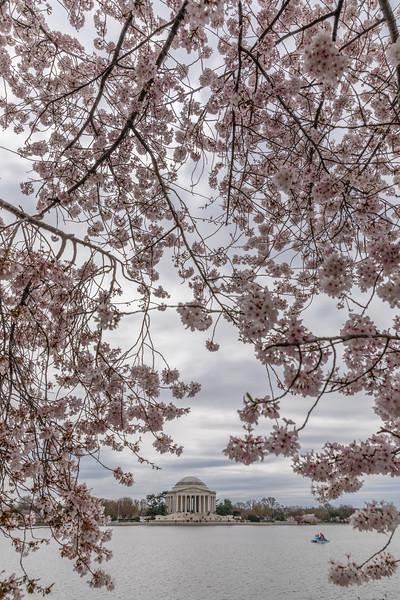 CherryBlossom2017-9517.jpg
