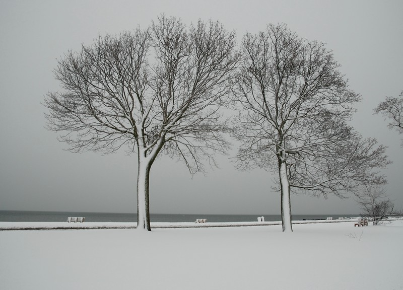 Snow on Trees.jpg