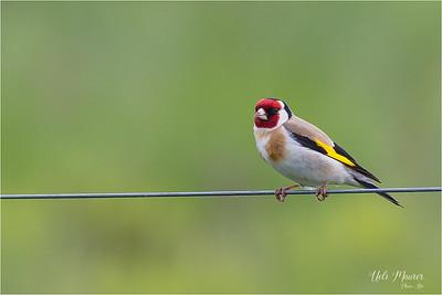 BirdLife Neerach