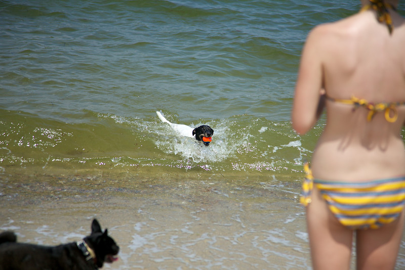 Cape Cod 2011 64.jpg