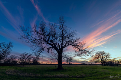 Waller County - Sunsets & Trees  1-6-20