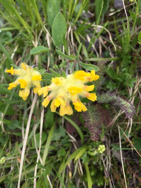 Wild flowers blooming in the Switzerland Alps.