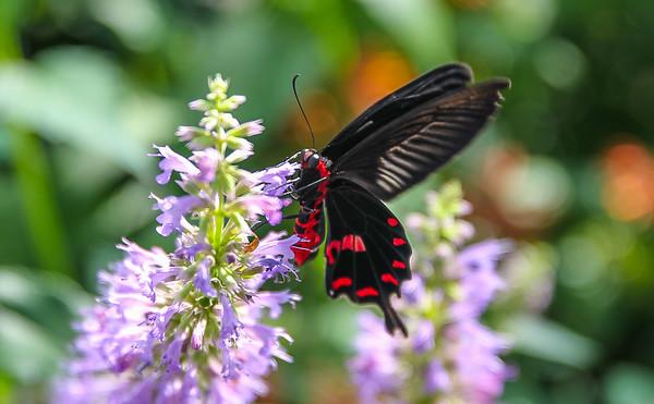 Lewis Ginter Butterflies 2013