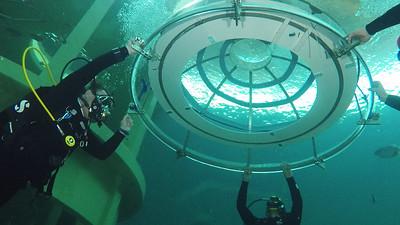 TODI - Nemo Garden by Ocean Reef Group Installation