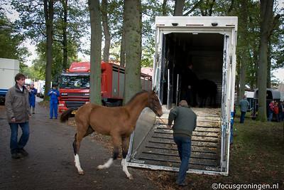 drenthe - zuidlaren - paardenmarkt 2010