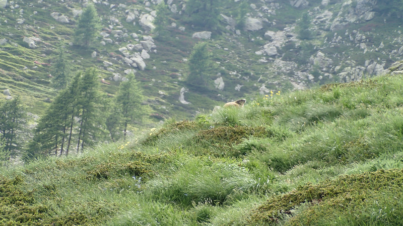 Walk from Val Gordolasque to Lacs de Prais. 900m vertical of stunning scenery!