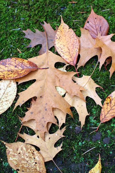 Portland Japanese Garden  11-11-11  3517.jpg