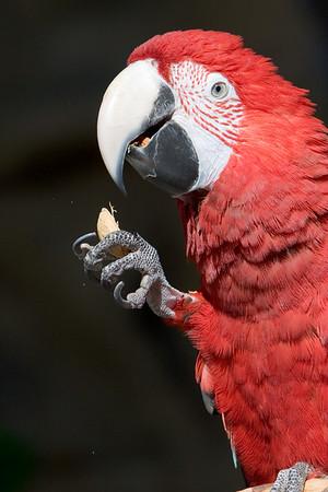 Point Defiance Zoo & Aquarium: Wild Wonders Outdoor Theater