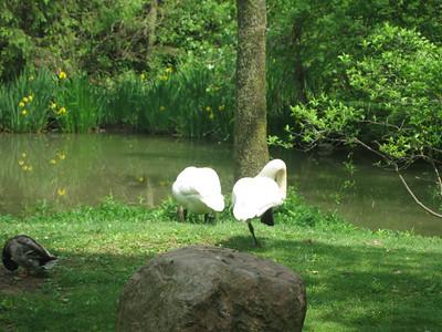 Columbus Zoo 20120505