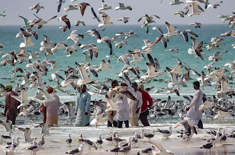 Sardine Season (9)- Dhofar.jpg
