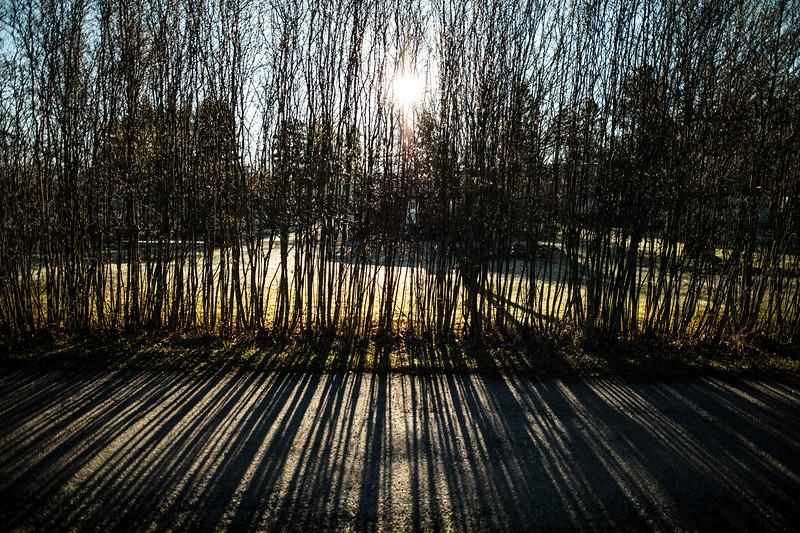 sticks morning light.jpg