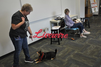 Lib Therapy Dog 2018