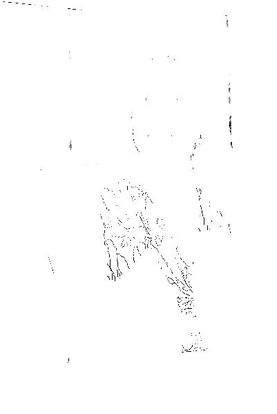 DSC08989.png