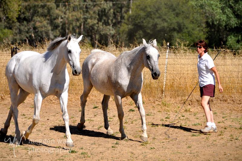 EB&Horses-107.jpg