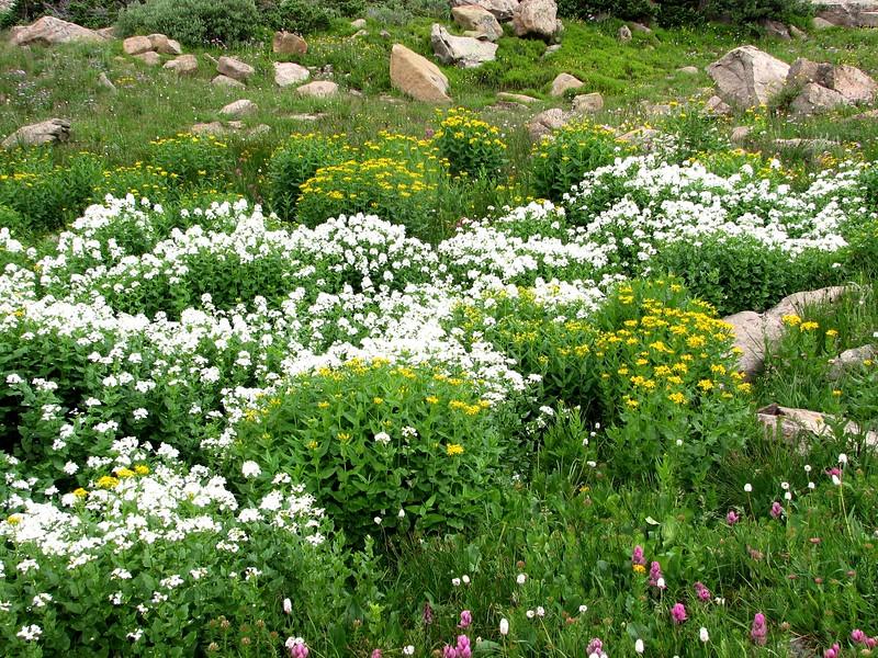 amh FLOWERS (1608).jpg