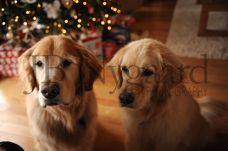 12-29-17 Tom and Marlyn Edwards's dogs - Max and Gracie-2.jpg