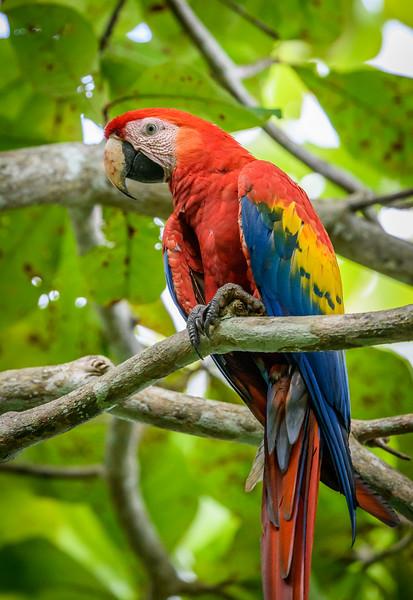2018-07-15_16h32m30s_850_4766_Costa Rica.jpg