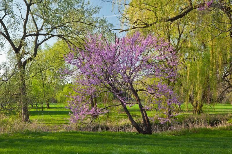 Spring12-1241-Edit.jpg