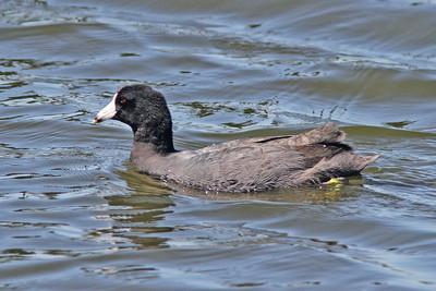 Florida 2011, mostly birds