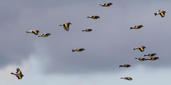vogels rottemeren (3)