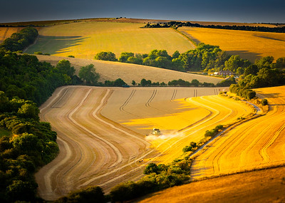 The South Downs