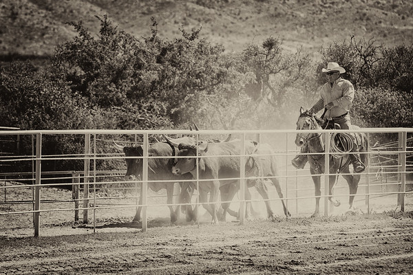Sunday Roping-08-23-15-25