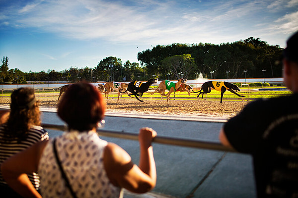 Personal: Last Days of Dog Racing