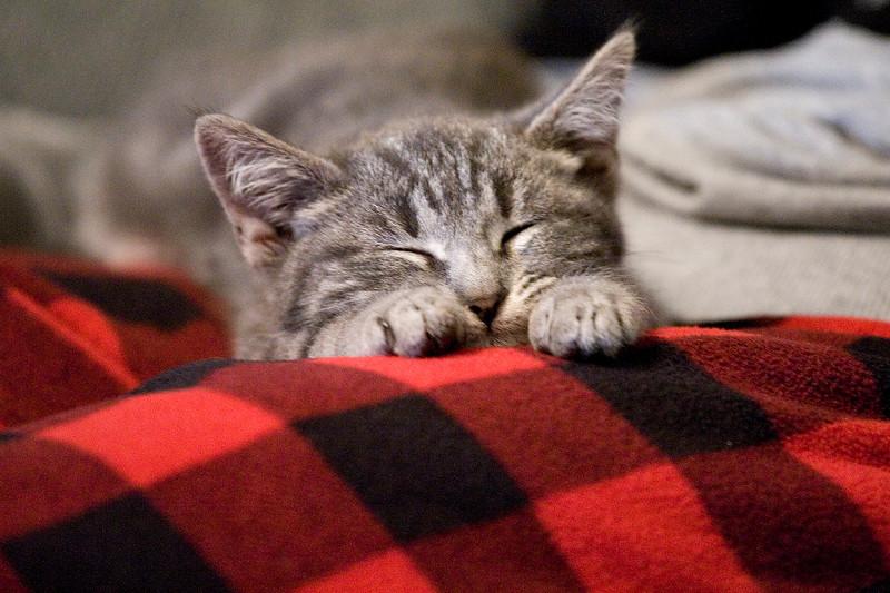 new-kitty-05.jpg