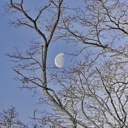 Lune - jour