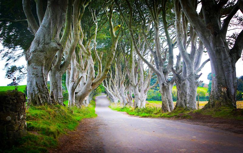trees 33.jpg