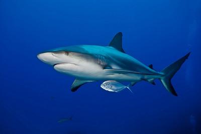 Bahamas Sharks and Dolphins - 2009