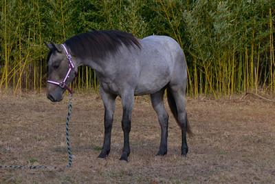 Dan Erb's Quarter Horses  - March 12, 2021