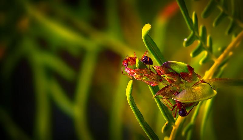 Bugs and Beetles - 89.jpg