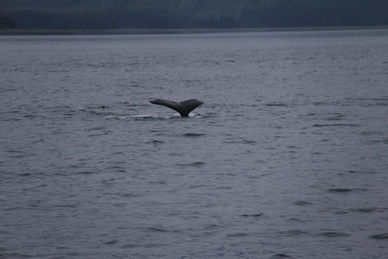 20160717-017 - WEX-Whale.JPG