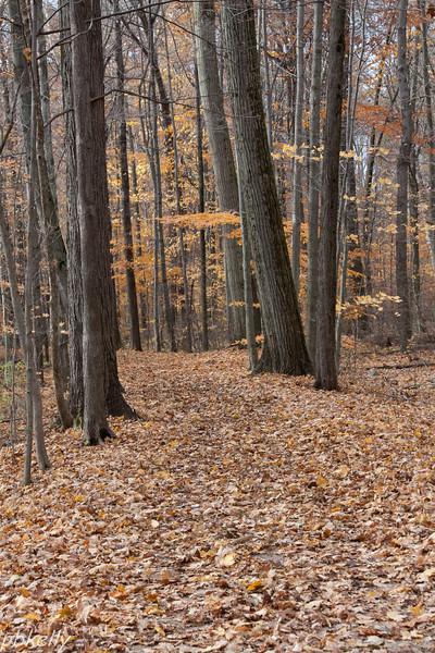 Woods 111013.jpg
