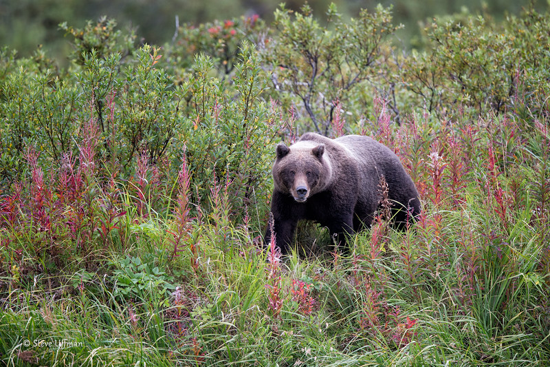20140903-20140903-_G7Q2998Katmai-Bears-Kinakuntitled-shoot-Edit.jpg