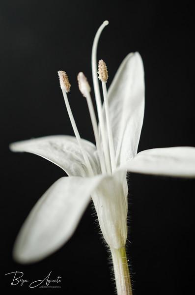 _DSC4395-Whiteness.jpg
